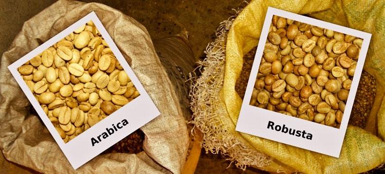 Арабика и Робуста - виды кофе