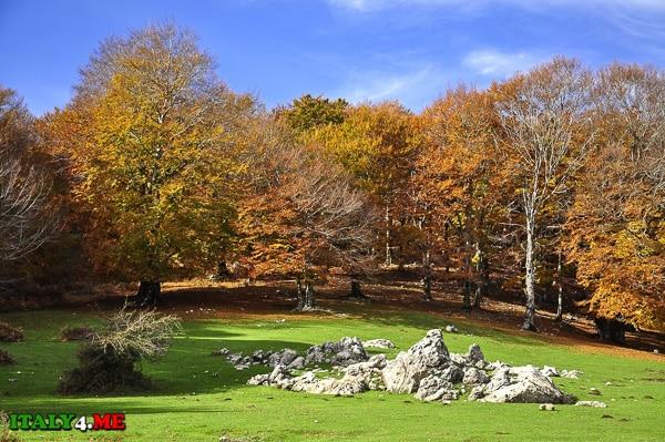 park_na_Sicilii_Bosco_della_Ficuzza
