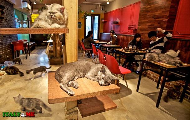 кошачье кафе Япония