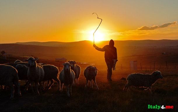 пастух Италия