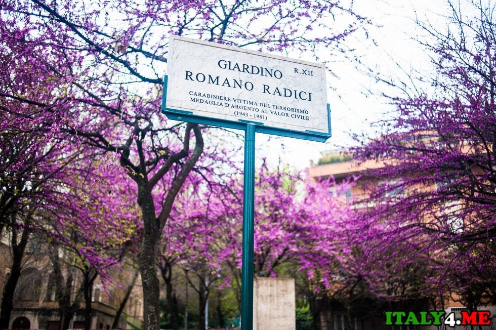 март Рим весеннее цветение деревьев