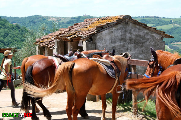 родео лошадь