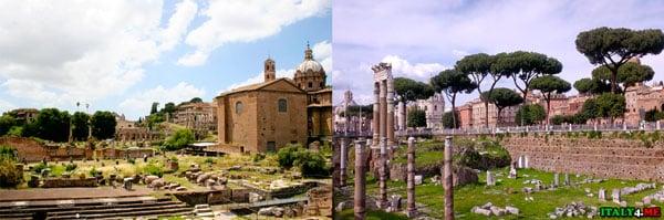 Пинии в Риме