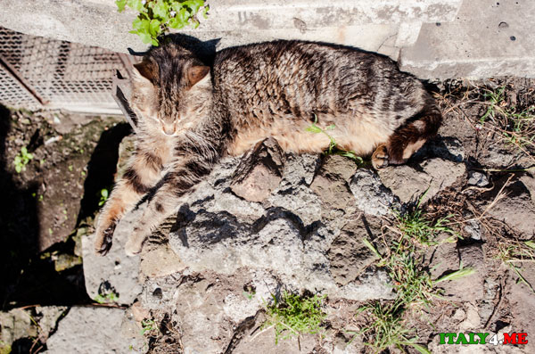 кот Рим
