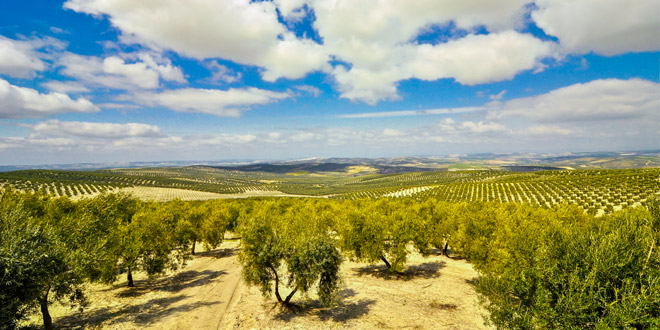 цены оливковое масло