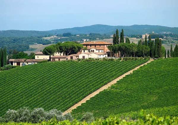 Лучшее итальянское вино с виллы Альтезино