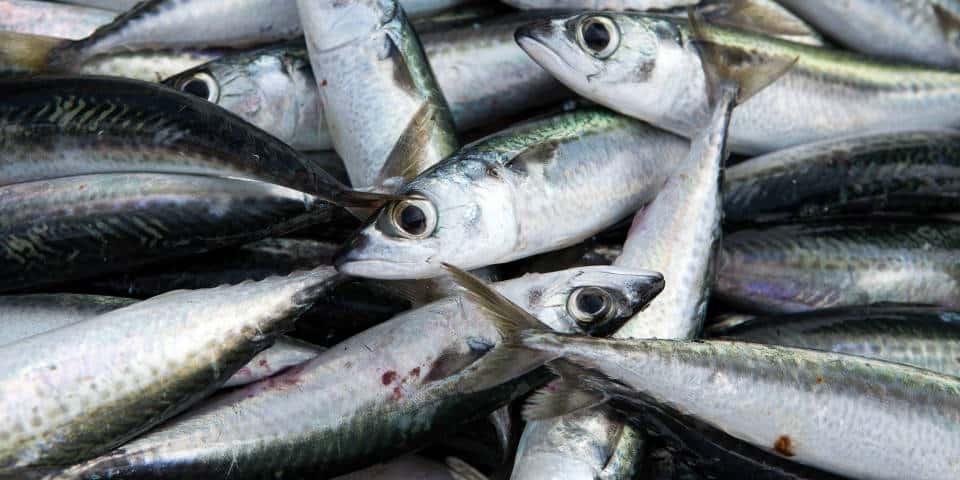 Свяжая рыба в Италии