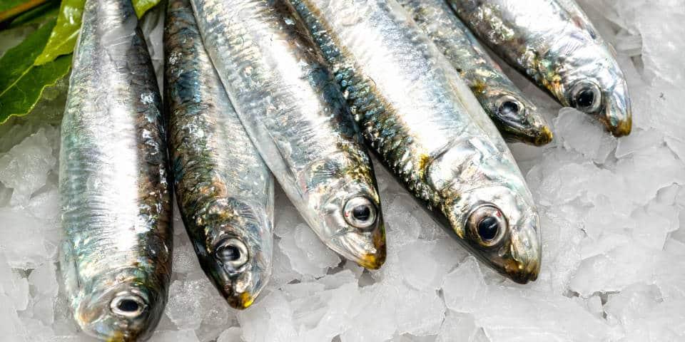 Рыбные рынки Италии