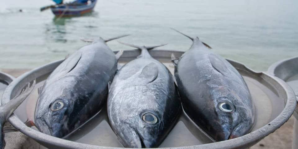 Сицилийский рыбный рынок