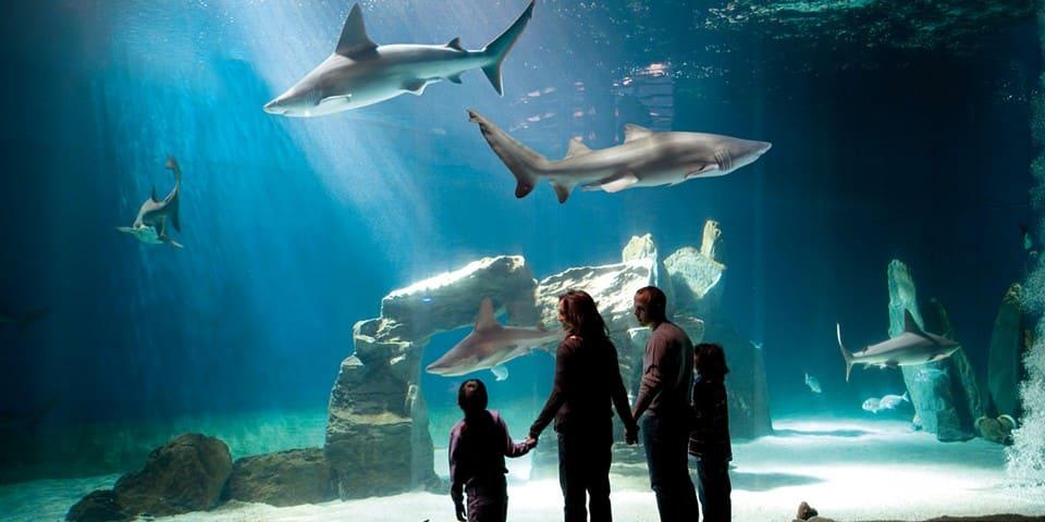 Экскурсия по аквариуму