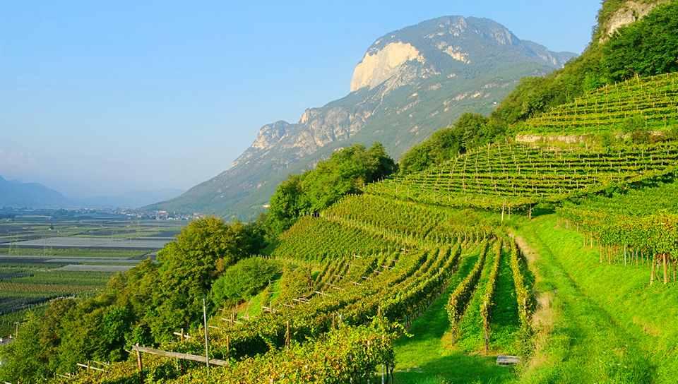 история виноделия региона насчитывает 3000 лет