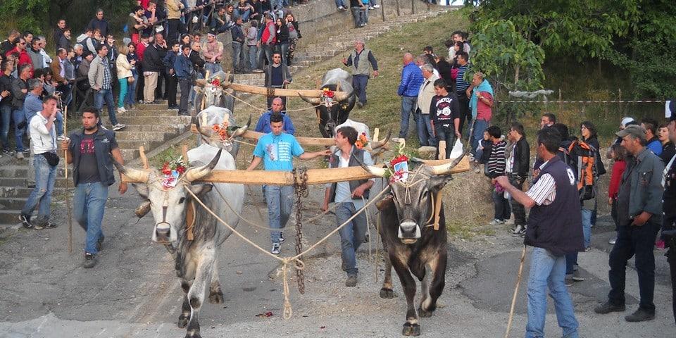 Праздник La Festa di Maggio в Аччеттуре