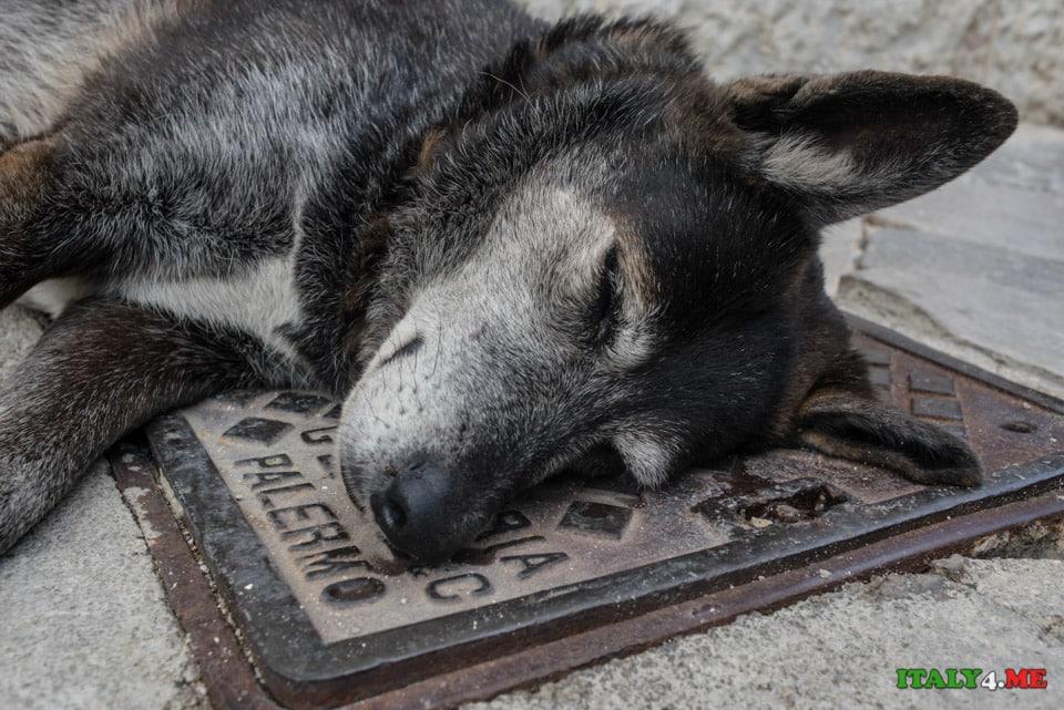 Собака в Палермо