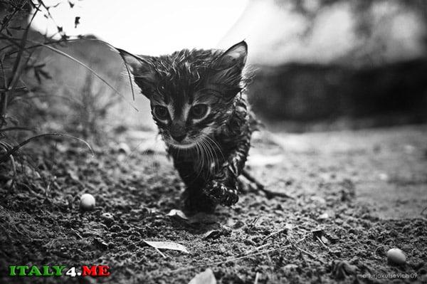 фото - победитель в категории домашние животные