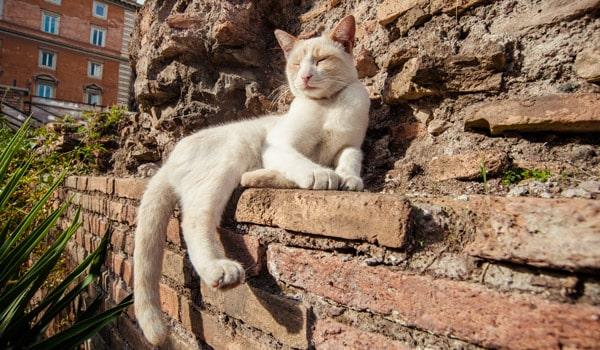 Коты в Риме