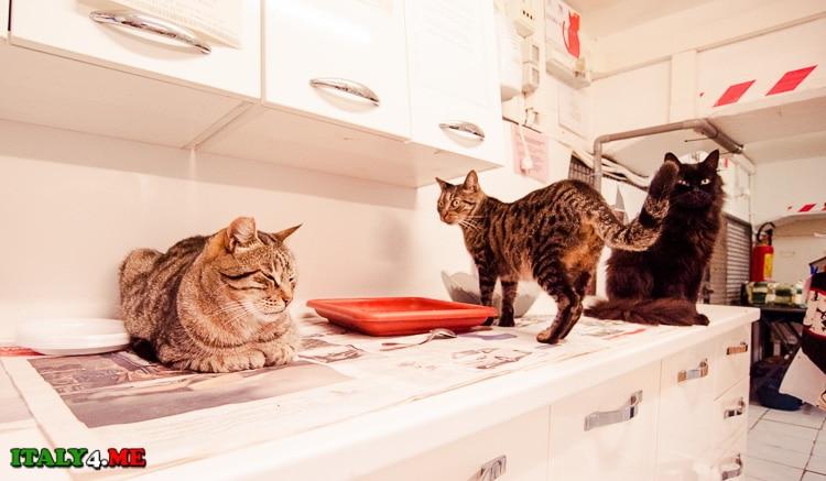 коты в римском приюте на площаде Арджентина