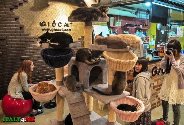 кошачье кафе в Турине будет напоминать Сеульское