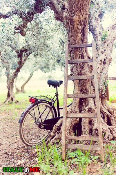 08_villa_Trapani_Mario
