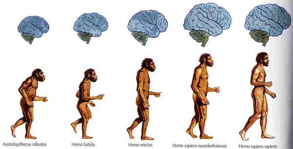 Цепочка эволюции человека