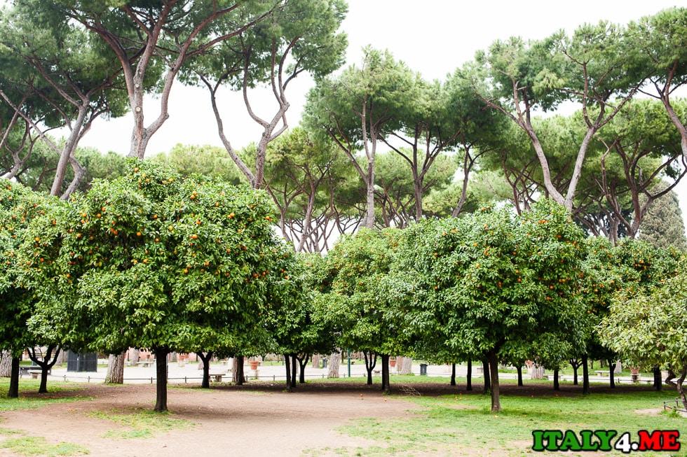 апельсиновый сад в Риме