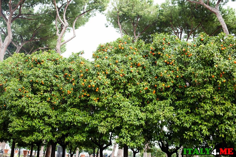 апельсины в Риме