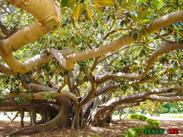 ботанический сад, дерево, Сицилия