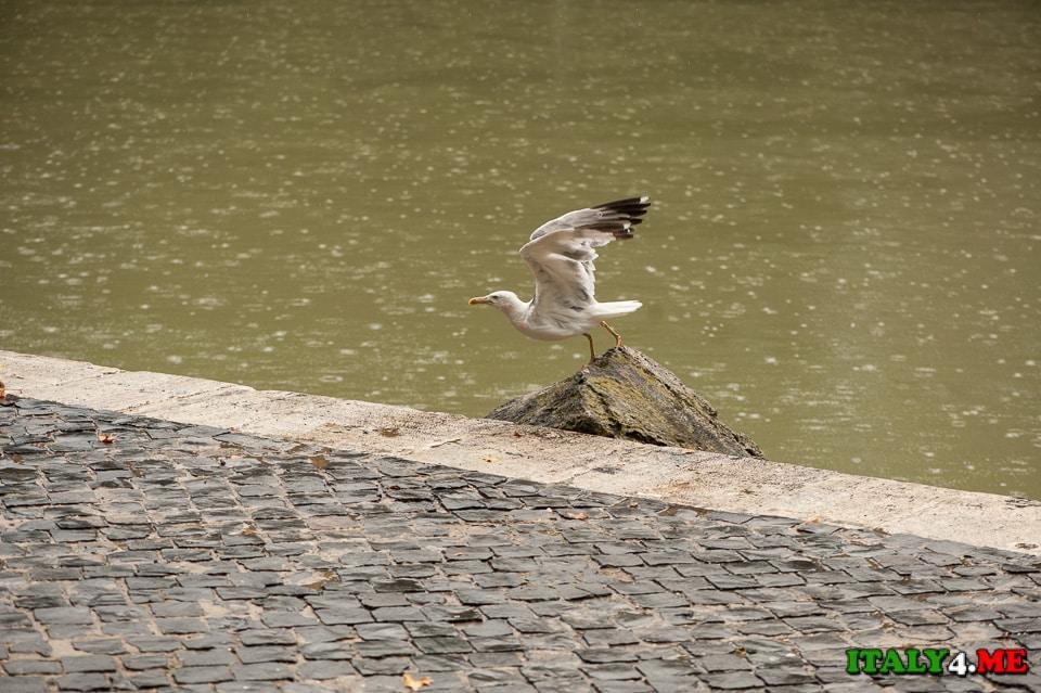 Один-день-в-Риме-июль-13-2014-12