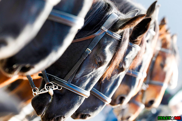конный спорт лошади на старте