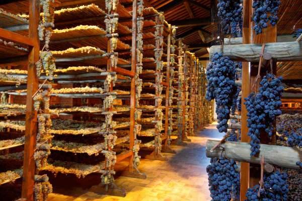 Производство красного вина - подготовка винограда