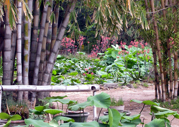 Достопримечательности Палермо - Ботанический сад