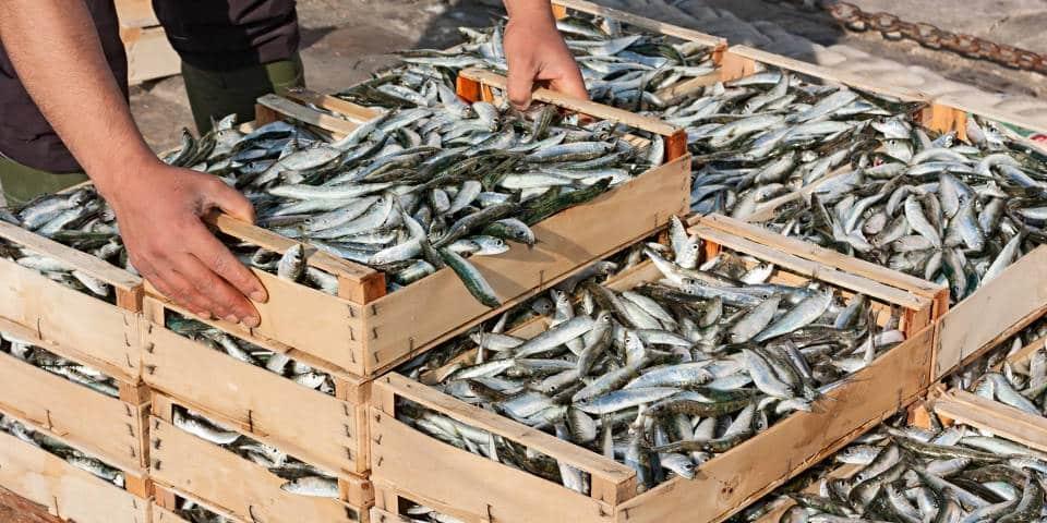Итальянский рыбный рынок