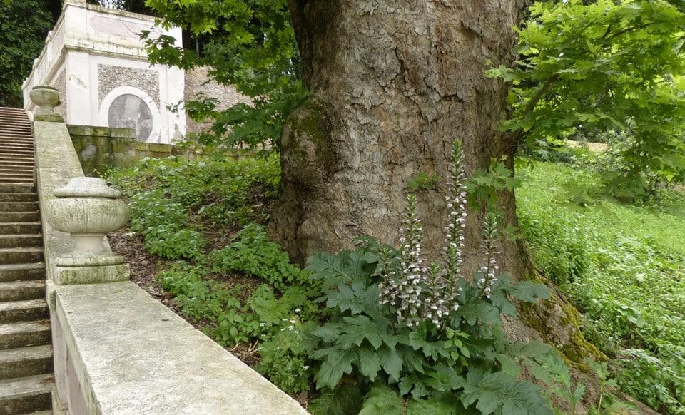 Ботанический сад Сиены