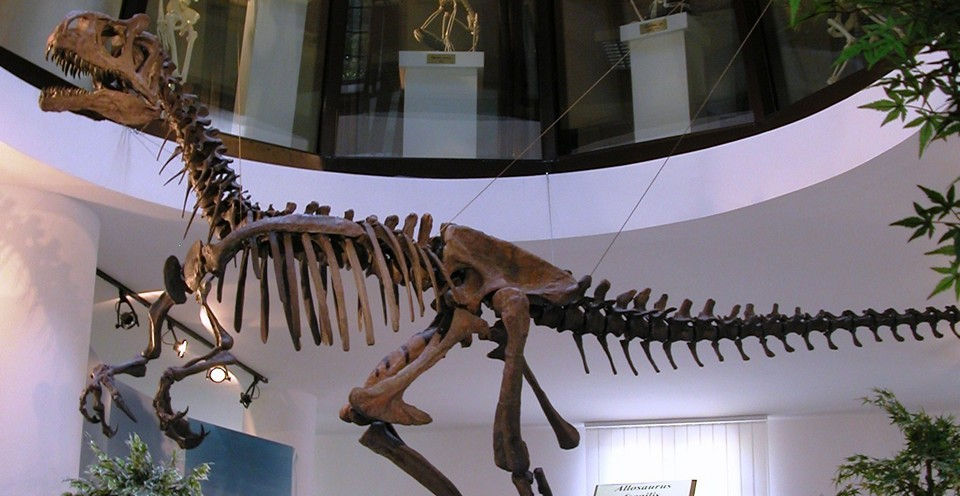 Научный музей университета Кьети