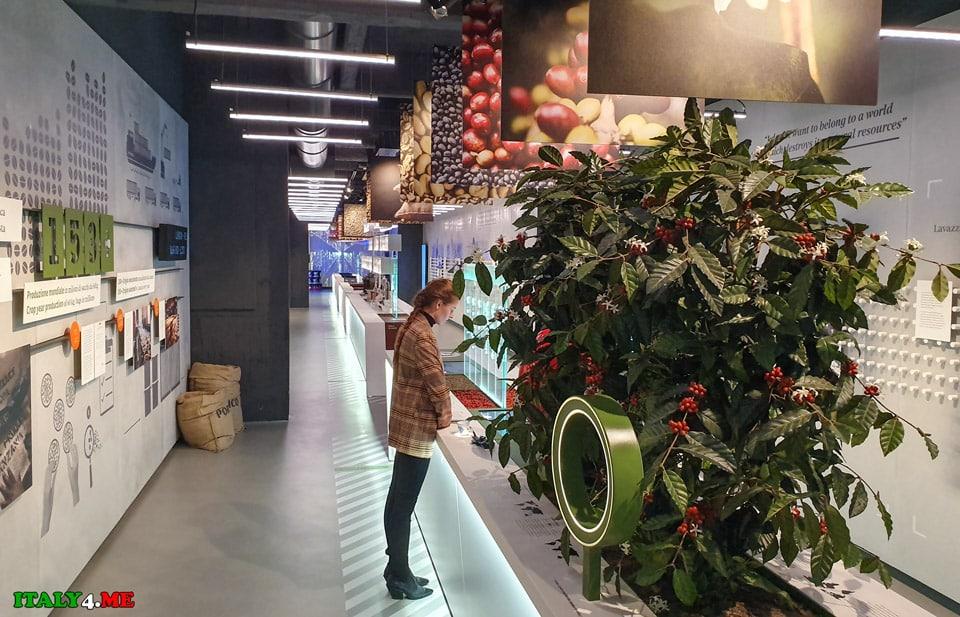 кофейная плантация в музее Лавацца в Турине