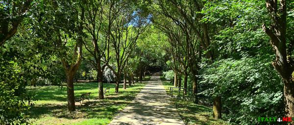Аллея к парку Монстров в Бомарцо