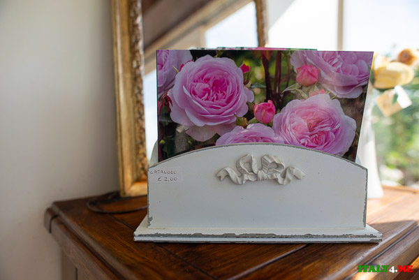 Открытка с изображением розы