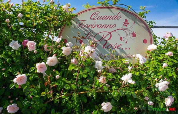 Roseto Giardino Quando Fioriranno Le Rose