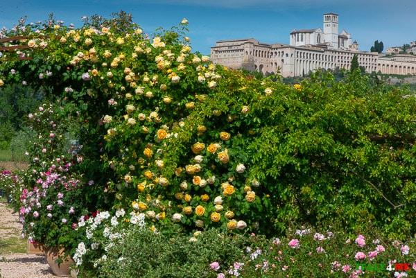 Красивые места в Умбрии – розарий в Ассизи