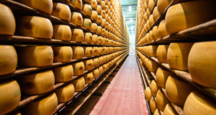 Как делают сыр Пармезан в Италии