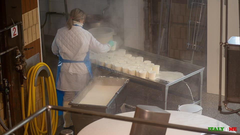 Производство Пармезана добавление сычужного фермента