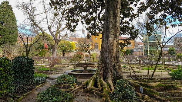 Магнолия в ботаническом саду Падуи